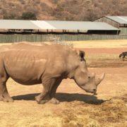 FMCSA commemorates World Wildlife Day